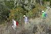 Group traversing to top of next drainage (openspacer) Tags: berry heteromeles jasperridgebiologicalpreserve jrbp people roscaeae route toyon