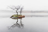 Rydal Tree in the Mist, Rydal Water, Lake District (MelvinNicholsonPhotography) Tags: rydal rydalwater lakedistrict cumbria dawn mist fog tree island water calm peaceful zen melvinnicholsonphotography