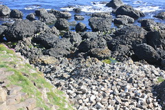 IMG_3431 (avsfan1321) Tags: ireland northernireland countyantrim unitedkingdom uk giantscauseway causewaycoast wildatlanticway basalt rock stone blackbasalt column columnarjointing columnarbasalt ocean atlanticocean landscape