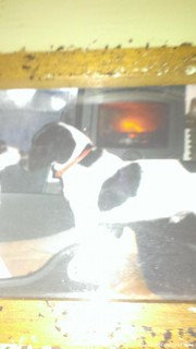 Wed, Dec 27th, 2017 Lost Male Dog - Chre Dhubh Spiddal Galway, Galway
