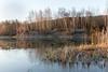 Photographed by Barabanov Alexey 2017 (valmar20051) Tags: tulskayaoblast russland ru река вода закат рассвет липецк россия лошади лебеди