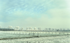 West Frisian winter landscape. (Alex-de-Haas) Tags: smorgens 50mm d5 hdr january nederland nederlands netherlands nikkor nikkor50mm nikon nikond5 noordholland schoorldammerbrug thenetherlands westfriesland bevroren bridge brug cold daglicht daylight fog foggy freezing frozen handheld haze hazy highdynamicrange januari kou koud landscape landschap licht light meadows mist misty morning nevel nevelig ochtend vrieskou weiland winter