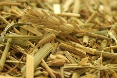 The needle in a haystack (JuliSonne) Tags: needle pins hay sewing looking find macro straw nadel heu nähen suchen finden makro stroh