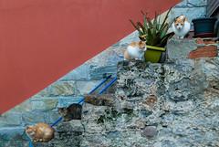Cuatro Gatos (Oscar F. Hevia) Tags: cuatro 4 gatos mininos escalera macetas plantas curiosos fourcats cats four pussycat stairs pots plants curious asturias asturies españa illas laperal paraísonatural principadodeasturias spain candamo es maceta jardinera flowerpot stairway stair