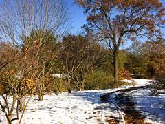 IMG_5435.jpg (proximity2nature) Tags: olmstedlinearpark snow atlanta georgia unitedstates us