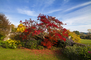 Autumn glory at Killerton