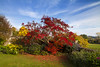 Autumn glory at Killerton (Christian Hacker) Tags: killerton nationaltrust autumn autumnal colourful colours bluesky red foliage devon uk canon eos50d tamron 1750mm maple fallenleaves flowers