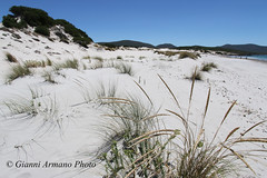 Dune di sabbia bianca (Gianni Armano) Tags: dune sabbia bianca sardegna porto pino cagliari foto gianni armano photo flickr