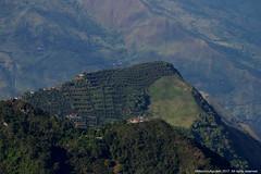 Cafetal (Ivan Mauricio Agudelo Velasquez) Tags: montaña mountain granja finca cafe cafetal coffe agricultura rural antioquia colombia sonson carretera forest bosque green verde