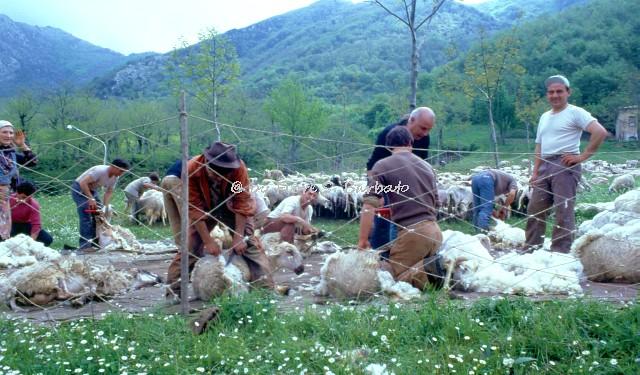 Fiori Bagnoli Irpino : Fiorista di fiducia boutique del fiore di asya muratori