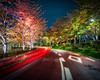 Autumn Colors At Night In Tokyo (Stuck in Customs) Tags: japan tokyo 80stays rcmemories trey ratcliff stuck in customs stuckincustomscom aurora hdr tutorial photography photo long exposure city scape trees night lights trails hasselblad x1d tree