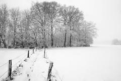 Snowscape (Stonebridge65) Tags: landscape landschap diepenveen salland overijssel nederland netherlands nikon d5100 sigma sneeuw snow snowscape trees path winter trail footsteps abigfave