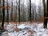 Die letzten Blätter an den Bäumen (Antje_Neufing) Tags: winter dezember hochwald buche einsam kahl germany deutschland fuji x10