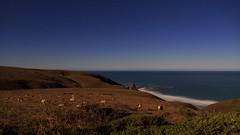 Tule Elk Grazing by Moonlight (fksr) Tags: tomalespointtrail pointreyesnationalseashore night sky stars pacificocean horizon moonlight landscape tuleelk cervuscanadensisnannodes marincounty california