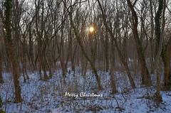 Merry Christmas (Miki216) Tags: christmas winter december snow season tree sun sunset nikon woods forest nature