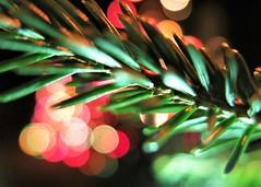 Merry Christmas & happy bokeh! (karma (Karen)) Tags: baltimore maryland home backyard christmastrees branches lights dof bokeh macromondays holidaybokeh hmm cmwd