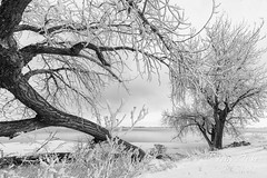 December 26, 2017 - A wintry scene at Barr Lake State Park. (Tony's Takes)