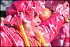 Pink (James Mundie) Tags: mummersparade2018 mummers philadelphia philadelphiamummersparade broadstreet newyearsday jamesmundie jamesgmundie profjasmundie jimmundie mundie copyright©jamesgmundieallrightsreserved copyrightprotected