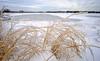 Merry Christmas from Maine (jtr27) Tags: dscf5422xl jtr27 fuji fujifilm xt20 xtrans samyang bower rokinon 12mm f20 f2 manualfocus ultrawide landscape scarborough marsh maine newengland ice winter wideangle