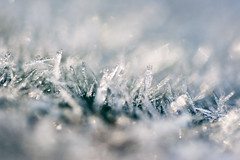 battle of the frost giants (bascat) Tags: bascat bas canon sigma 70mm f28 macro ice crystals frost december 2017