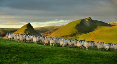 I've never had so many friends (PentlandPirate of the North) Tags: sheep chromehill parkhouse peakdistrict derbyshire flock friends ~flickrinnes flickrinnes earlsterndale