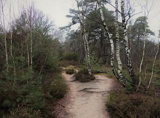 Nature area Sallandse Heuvelrug - Haarlerberg