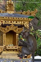 Cave Temple, Pemuteran, Bali (M_Hauss) Tags: indonesien indonesia asia asien bali temple monkey affe animal shrine schrein tier