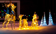 Happy Deer (J.R. Rondeau) Tags: rondeau yellowknife nt christmas christmaslights christmasdecorations bokeh colours colors canoneos tamron2875 photoshopelements10