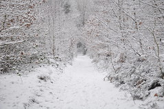 Snow tunnel (katy1279) Tags: winter snow snowytunnel trees nature woodland