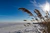 IMG_3378 (Joseph Colozzo Photography) Tags: bay frozen canon80d grass seagrass ice