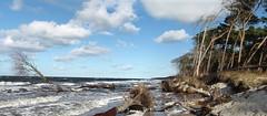 Darßer Weststrand 1 (_BSnake_) Tags: darserweststrand dars fischlanddarszingst zingst strand bäume natur wild wolken blau himmel westrand sand see ocean germany deutschland ostsee