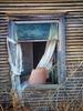 SAM_4301psn (slammerking) Tags: abandoned chair curtains kansas house