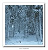 a moment like this ... (friedrichfrank1966) Tags: moments snow schnee trees naturephotography white nature scenery forest rahmen availablelight