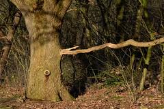 DSC_4205c (Jan Visser Renkum) Tags: goudsberg lunteren bomen bos