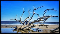 10/25/17 - Driftwood Beach at Jekyll Island, GA. (CubMelodic23) Tags: october 2017 vacation trip hdr beach ocean sand georgia jekyllisland driftwoodbeach me dave selfportrait