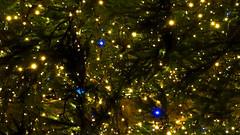 L' albero di Natale del Sindaco (r_evolution63) Tags: padova padua veneto italia italy europ europe città city urban provinciadipadova viaviiifebbraio via8febbraio liston natale noel christmas albero tree alberodinatale christmastree colori colors sony dschx400v