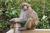 Monkey (Vinchel) Tags: vietnam danang outdoor light l16 animal monkey wildlife