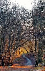Boxing Day walk (moi_images) Tags: walk scotland mugdock sunlight path winter leaves