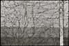 Spillern (Harald Reichmann) Tags: niederösterreich spillern autobahn wand lärmschutz bauwerk linie vertikal horizontal netzwerk alltagskunst analog film nikonf3