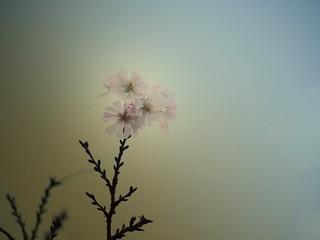 a silent air