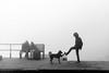 Handshake (Logesh Photostream) Tags: varanasi travel nikond750 dog pet morning handshake buddy blackwhite fog mist cwc love play wishing comical fun