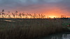 Sunrise !!! (Roudoudou17) Tags: nouvelleaquitaine france leverdesoleil projet3652017 charentemaritime chatelaillonplage marais