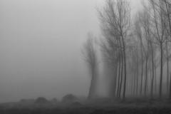 sull'argine del lambro (mat56.) Tags: paesaggi paesaggio landscape landscapes alberi trees nebbia fog misty argine fiume river lambro lambrinia chignolopo pavia pavese antonio romei mat56 autunno autumn bianco black nero white pianura padana