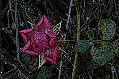 4 - Bien seule.... (melina1965) Tags: 2017 décembre december bourgogne burgondy nikon coolpix s3700 saintvallier saôneetloire