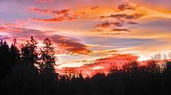 Sunrise at local park. Day 2 / 365 (Wayne~Chadwick) Tags: