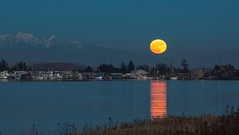 Wolf Moon Ladner (pixelpn) Tags: ladnerbc wolfmoon fullmoon delta fraserriver