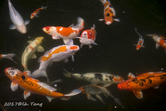 Craps (lh tanG) Tags: fish crap