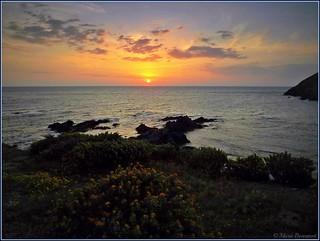 Cerbère au lever du soleil d'avril