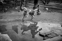 Daily life (A t i k R a h m a n) Tags: people street bangladesh nikon faridpur asia blackwhite