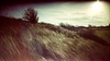 Brouwersdam (jwb-photography) Tags: analog colorimplosion grain film photography filmgrain adox color c41 istillshootfilm buyfilmnotmegapixels winter golden gold tree bush meadow rural northsea netherlands holland dike brouwersdam zeeland nederland surreal retro vintage analogue dust scratch